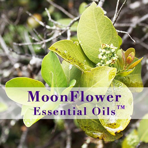 moonflower essential oils skin smooth image
