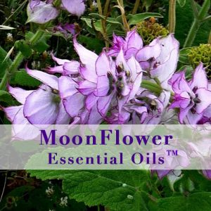 moonflower essential oils spotty skin image