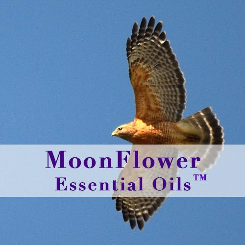 moonflower essential oils uplifting blend image
