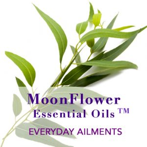 Essential Oil Blends for Everyday Ailments