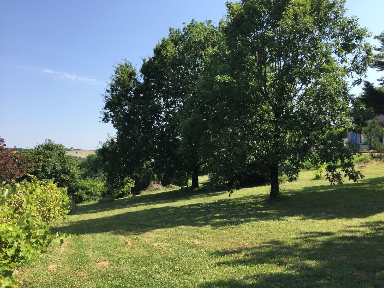 garden view photo