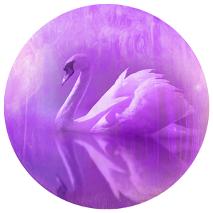magical swan image