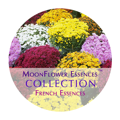 french moonflower essences image