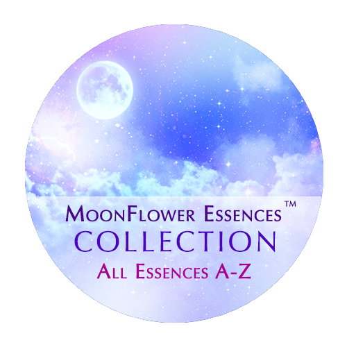 moonflower essences all collections image