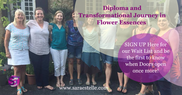 Accredited Diploma in Flower and Vibrational Essences